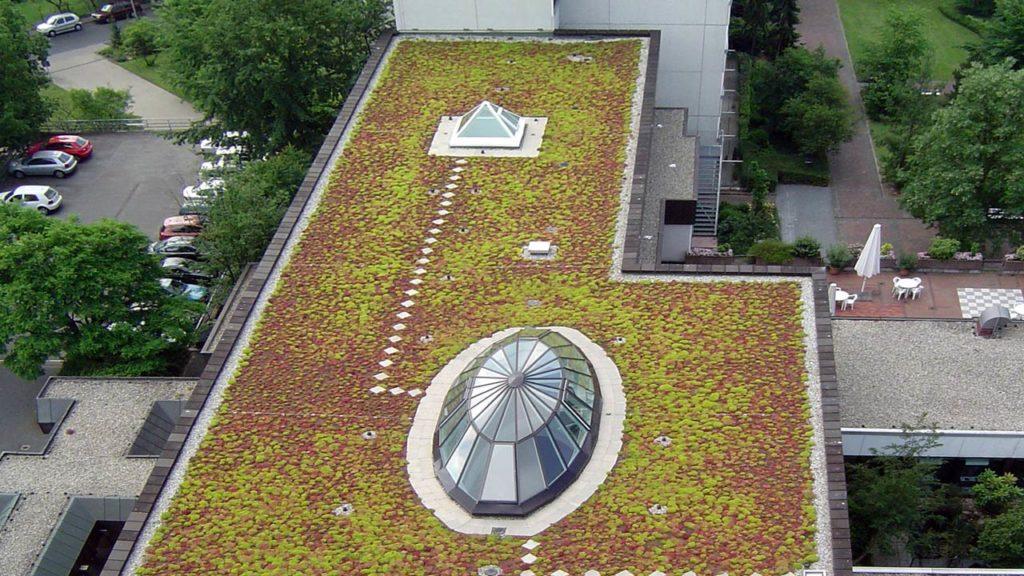 Dachbegrünung durch Fegerdach